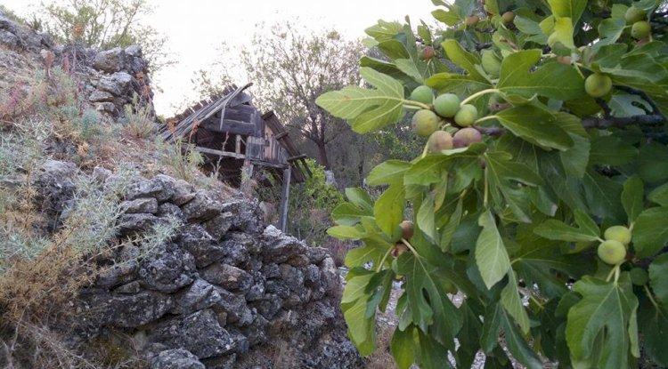 Akörü Köyü Resimleri - Akörü Köyü Fotoğrafları - 8