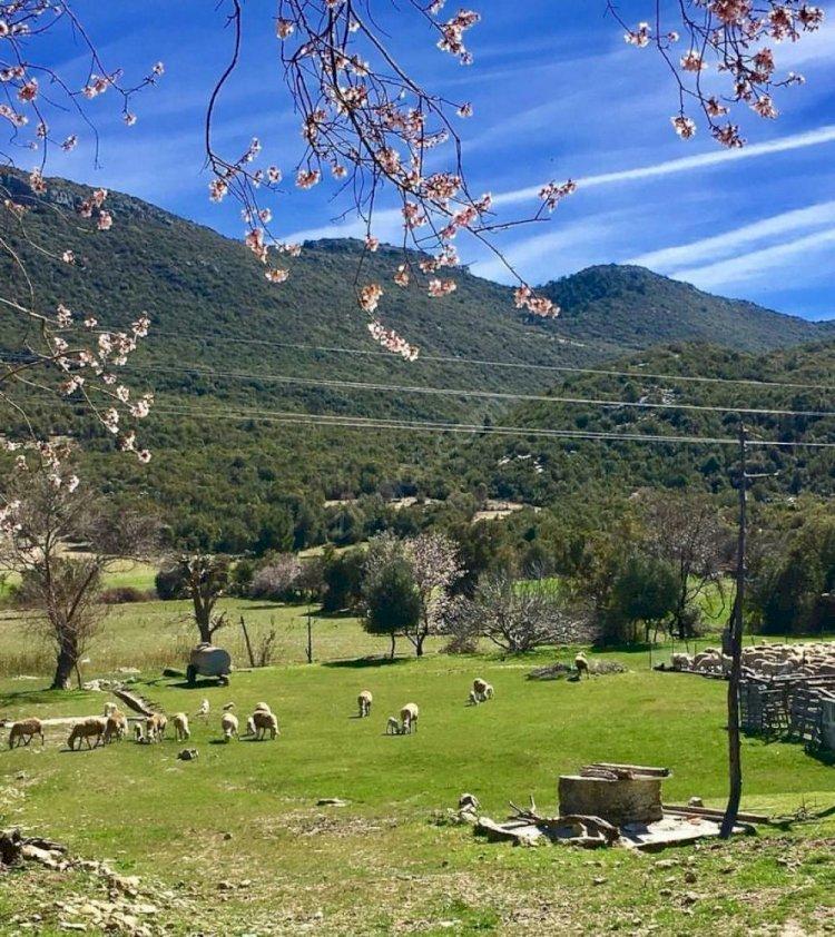 Kaş Sarıbelen Mahallesi - Sarıbelen Köyü  (Sidek) Hakkında Her şey