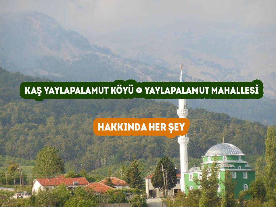 Kaş Yaylapalamut Mahallesi - Yaylapalamut Köyü Hakkında Her şey